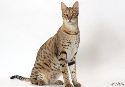 世界一デカイ猫