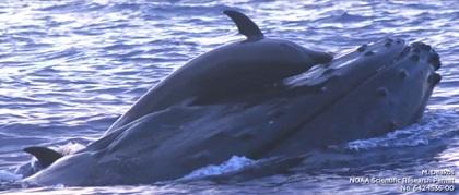 イルカとクジラ