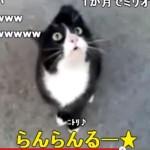 らんらんるー猫