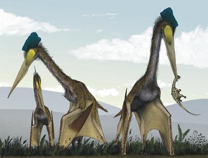 世界最大鳥