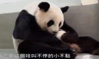 パンダのお母さん