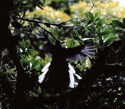 世界一美しい鳥